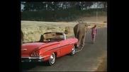 слонът моя приятел - Chal chal mere saathi