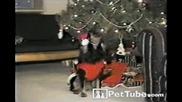 Куче Пее Известната коледна песен !