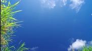 Райско кътче! - Окинава Острови