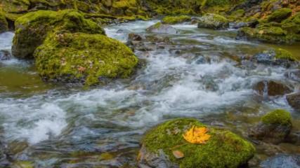 Есента е тук ! Страхотно 4к видео...остани без дъх.