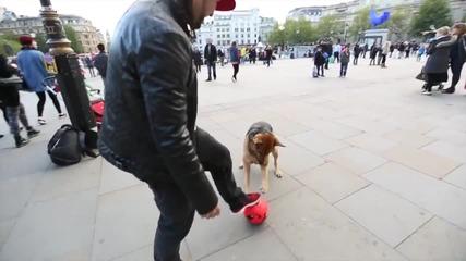 Техничар се заиграва с куче в Лондон ..