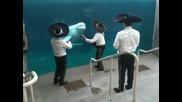 Музиканти правят серенада на белуга в делфинариума