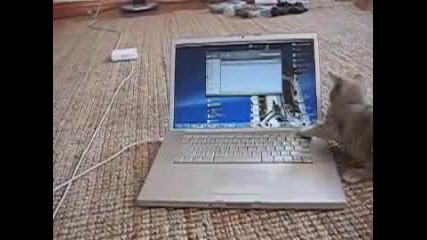 По - Скъпа Играчка За Котките