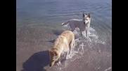 Кучета Плуват В Морето