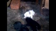 Много Красиви Зайчета Малки