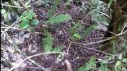 Катерене в джунглата и скачане от скали - First Person