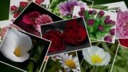 Красотата на всяко едно цвете! ... (music Frédéric Delarue)