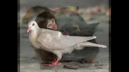 Заедно срещу насилието над животните!