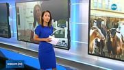 Новините на NOVA (17.07.2018 - следобедна емисия)