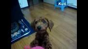 Говорещо Кученце - Казва - Мама.. Мама.. Мама ;)