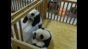 Бягството на бебе панда