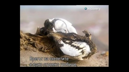 - Бг Превод - Оцеляване на предела - Намибия