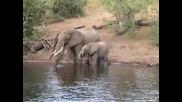 Крокодил напада Слон