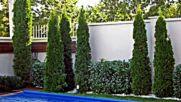 Колекция - Галерия озеленяване и поддържане на градини и двор