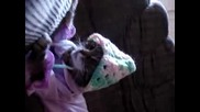 Котка В Пижамка - Смях