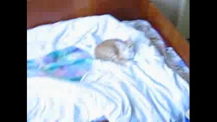 Котката Си Почива Царски