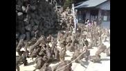 Хиляди луди маймуни .идиоти :)