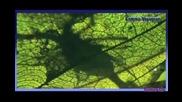 Enigma Voyageur (remix)