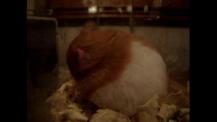 Ginger в аквариума на чудесата