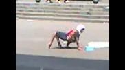 Изродена жена с обърнати крака