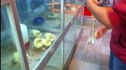 Хипнотизиране на малко пиленца