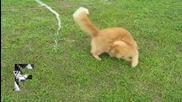 Сладки котки и вода Компилация - Август 2013