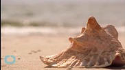 Seashell Shapes Show Strength For Safety