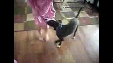 Котка защитава момиченце от куче:)