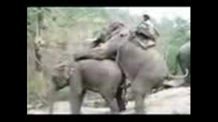 Любов Между Слонове