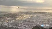 Епична миграция на пасажи риба край бреговете на Флорида !