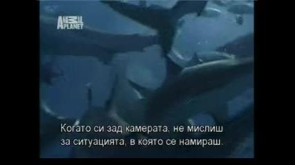 Как се оцелява ако ви нападне акула.