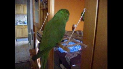 папагала коки
