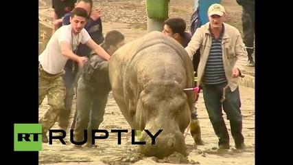 Тбилиси се напълни с избягали животни от зоологическата градина, след смъртоносните наводнения