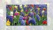 Цветница - Празник На Цветята