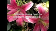 Честит 8 - Ми Март / Денят На Жената / !