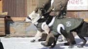 Chile: Police mountain patrol dogs gear up in winter gear to work on the slopes