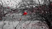 Red December Червен декември