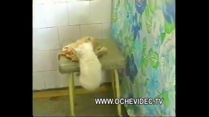 Коте открадна цяло пиле