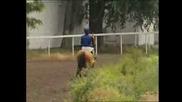 Надбягвания-  Ахалтекински  коне -  2007год.