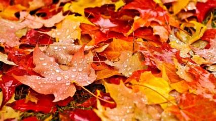 Защо листата на дърветата падат през есента