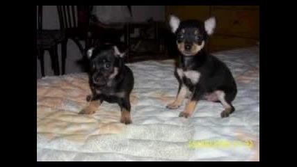 породи кучета Part 2
