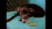 Много страшно куче