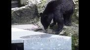 кунг фу мечка показва умения с тояга