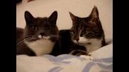 Кой Каза Че Котките Не Могат Да Говорят?