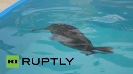 Спасени малки тюленчета в Русия скоро ще бъдат пуснати на свобода