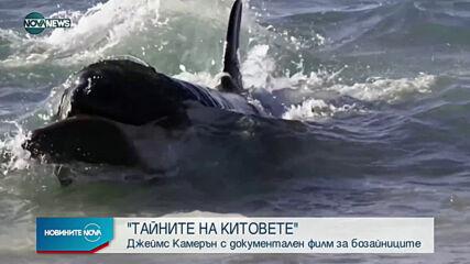 Джеймс Камерън с нов документален филм за живота на китовете