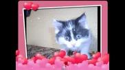 Моето Коте Елизабет