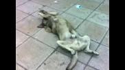 Улично Куче Се Препича На Слънце