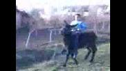 иван от гроздево язди магаре - 2