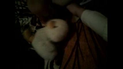Малкото пиленце - Сезон 1 епизод 3 - Бг аудио - Playstation 4